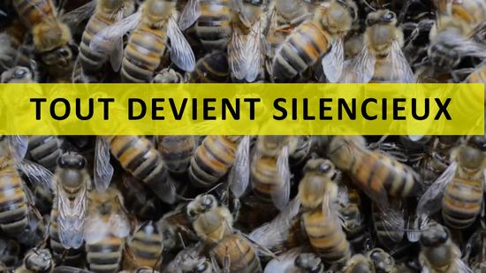 CINE DEBAT : Tout devient silencieux